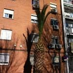 Al final este es el aspecto de las palmeras recortadas.