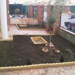 Plantamos un olivo y le pasamos las tuberías por debajo del hormigón.